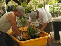 Volunteers at Maui Nui Botanical Gardens