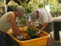 Volunteers at Maui Nui Botanical Gardens