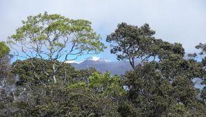 Kaulana Manu View