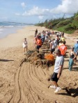 Dragging a net ball off Wailua Beach on Earth Day 2009.