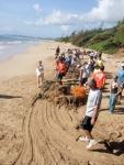 Dragging a net ball off Wailua Beach on Earth Day 2009.