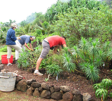volunteers with national tropical botanical garden