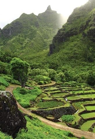 Spotlight: National Tropical Botanical Garden